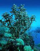 Fotografia fundo do mar